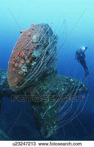 ビキニ環礁の画像 p1_10