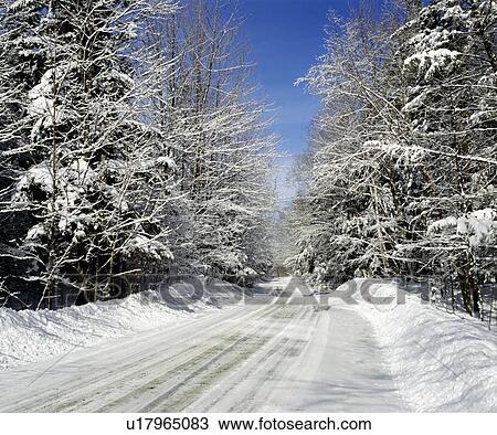 Winterastern