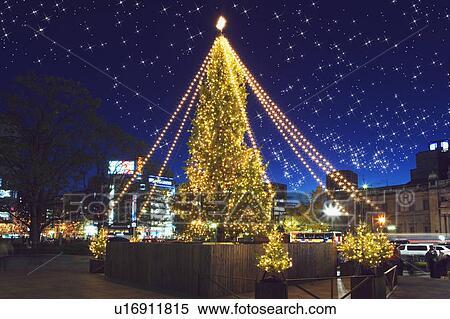 coleccin de imgen iluminado rboles de navidad estallo lente exposicin larga