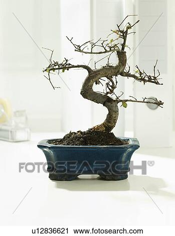stock fotografie bonsai topf schreibtisch u12836621. Black Bedroom Furniture Sets. Home Design Ideas