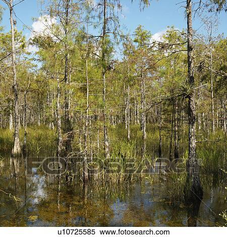 parque nacional everglades fica - photo #47