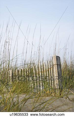 Stock Photo of Weathered wooden fence with beach grass on ...