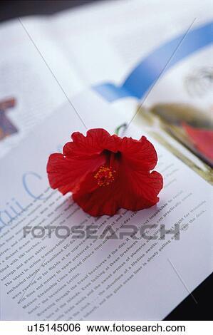 stock bilder hibiskus auf buch u15145006 suche stockfotografie posterbilder bilder und. Black Bedroom Furniture Sets. Home Design Ideas