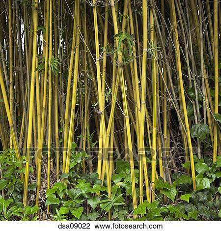 Stock Photo Of Close Up Of Bamboo Growing Outdoors