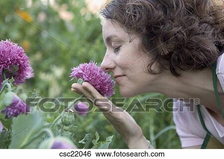 Chrysanthemums criticism essay