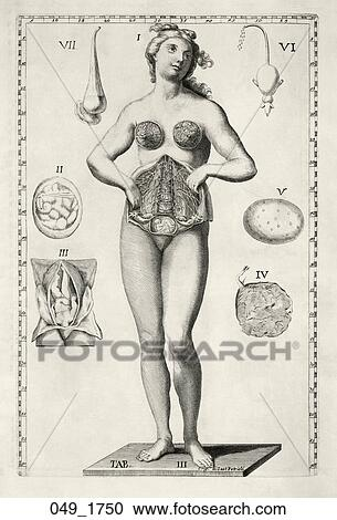 Vintage Anatomical Drawing Antique Anatomical