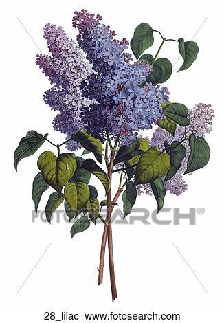 Galleria di illustrazioni anticaglia floreale - Serenelle fiori ...