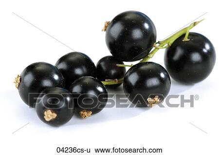 stock bilder schwarze johannisbeeren gegen wei er hintergrund nahaufnahme 04236cs u suche. Black Bedroom Furniture Sets. Home Design Ideas