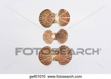 壳类艺术粘贴画