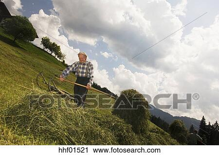 Stockfotografering østrig salzburger lander hø høst