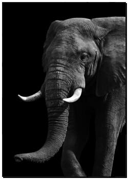 poster k nstlerisch schwarz wei elefant k14964439 kunst fotodrucke drucke auf leinwand. Black Bedroom Furniture Sets. Home Design Ideas