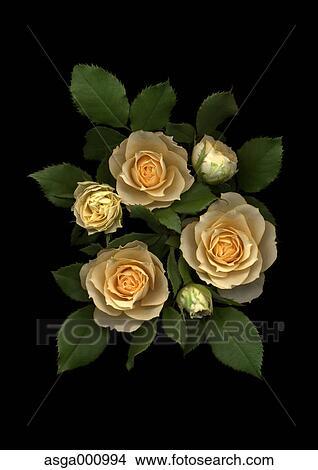 Rosa Fiori Su Sfondo Nero Immagine