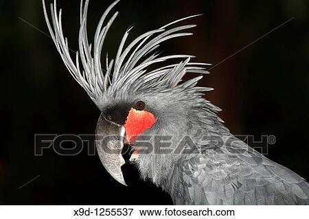μαύρο μεγάλο πουλί φωτογραφία πίπα φωτογραφίες POV