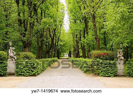 Alley In Royal Lazienki Park In Warsaw Poland Picture
