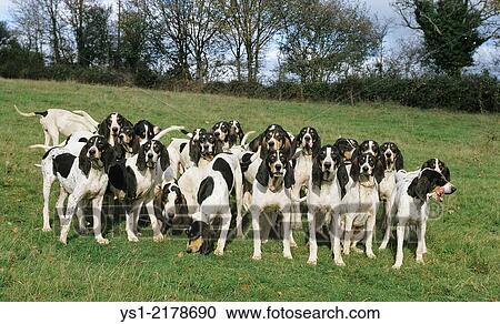 Ariegeois | Dog breed Wiki | FANDOM powered by Wikia