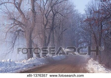 Farm Road On A Foggy Winter Morning With Snow And Weeping Willow Trees Stock Photo