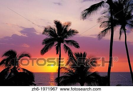 Sunset Over The Pacific Ocean Through Palm Trees At Hapuna