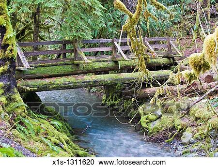 Wooden Bridge Crosses Elk Creek In The Staircase On Olympic Peninsula Stock Image