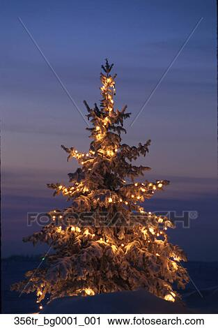 Christmas Tree W/ Lights Outside Sunset Winter /nMinnesota - Stock Photography Of Christmas Tree W/ Lights Outside Sunset Winter