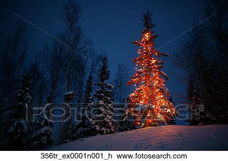 stock foto verlicht kerstboom buiten naast observeer vogels huis