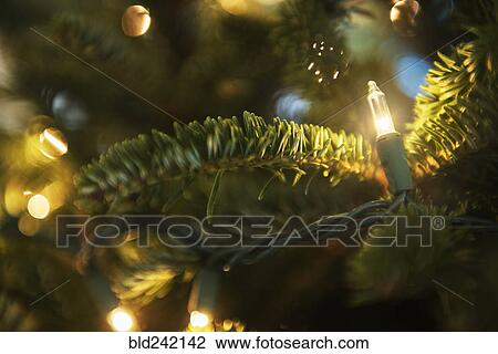 How To String Lights On A Christmas Tree Cool Stock Photo Of String Lights On Christmas Tree Bld60 Search
