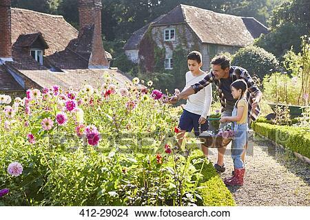 Stock Photo of Family picking flowers in sunny garden 412-29024 ...