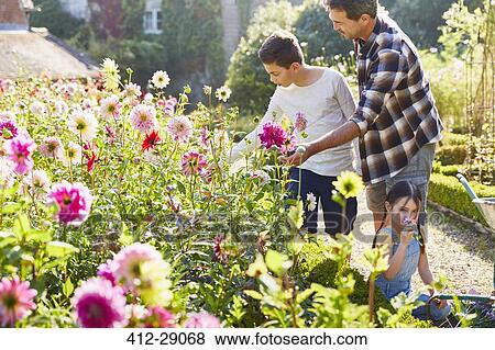 Pictures of Father and son picking flowers in sunny garden 412-29068 ...