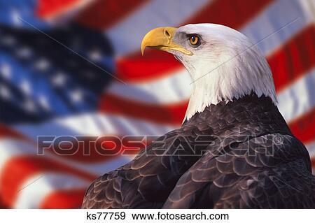 Stock Photograph Of Eagle American Flag Birds Of Prey Bird