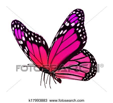 Dessin couleur papillon k17993883 recherchez des - Papillon dessin couleur ...