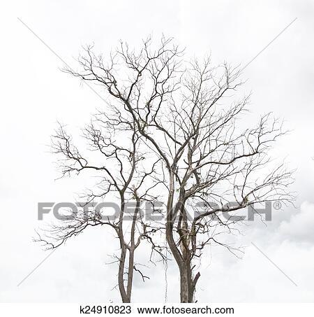 Dibujo árbol Muerto Sin Hojas K24910823 Buscar Clip Art