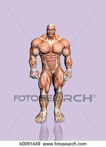 Stock Illustration Of Anatomy Of The Man K0091449 Search Vector