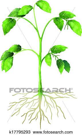 plante verte dessin