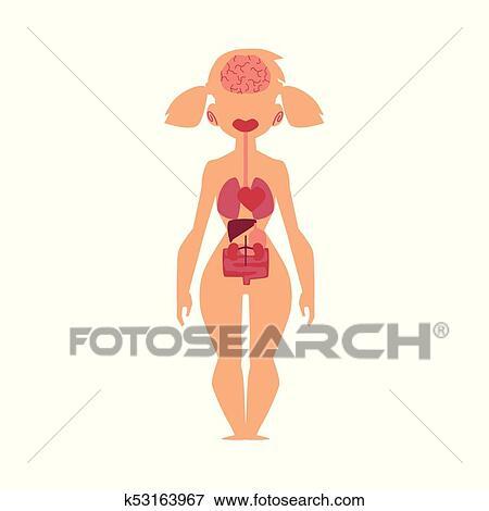 Clip Art - anatomía, gráfico, humano, órganos internos, cuerpo ...