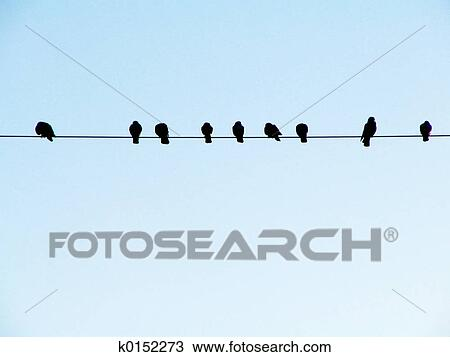 Stock Photo Of Birds On A Wire K0152273 Search Stock Images
