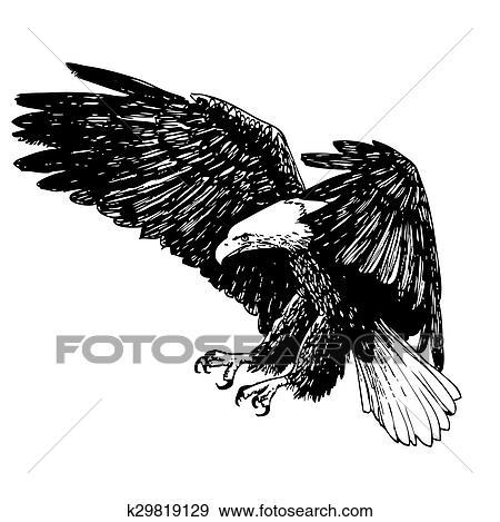 Schwarz Weiß Adler Hand Gezeichnet Clip Art K29819129 Fotosearch