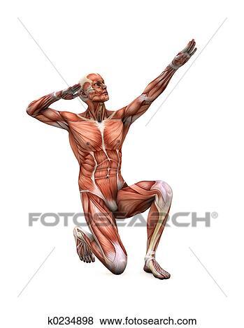 Stock Illustration - posieren, muskeln k0234898 - Suche Clip Art ...