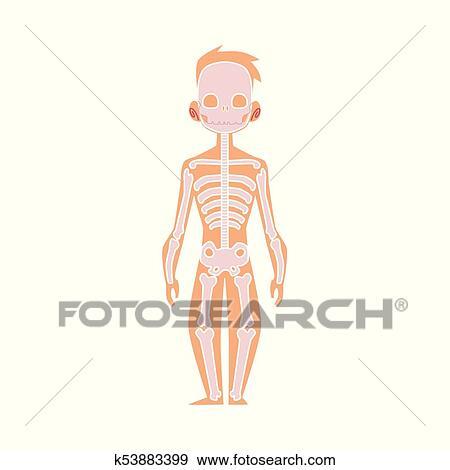 Clip Art - vector, plano, estructura, cuerpo humano, anatomía ...
