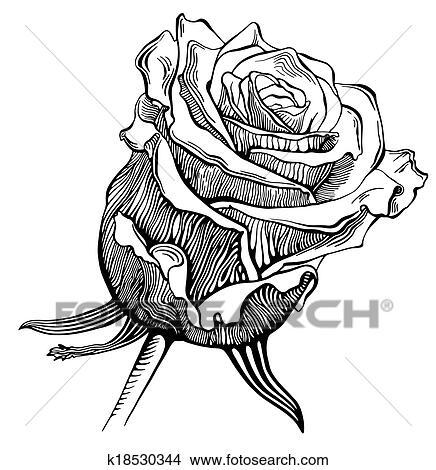 Preto Branco Digital Desenho Esboco Rosa Clipart K18530344