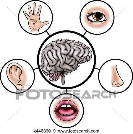 clip art of five senses brain k44636019 search clipart rh fotosearch com five senses clipart free five senses clipart black and white