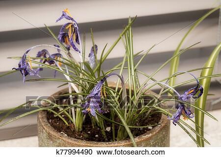 Blüte Pflanze Tot
