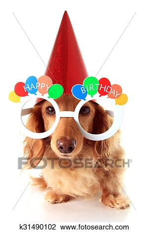 gelukkige verjaardag, hond stock afbeelding | k31490102 | fotosearch