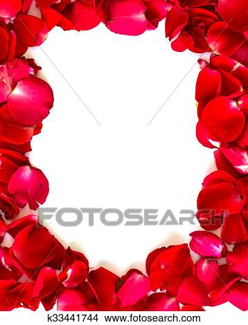 Stock Photo Of Red Rose Petals On White Background Valentine S Card
