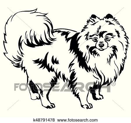 Dekorativ Stehen Porträt Von Hund Pomeranian Spitz Vektor Abbildung Clip Art