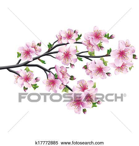 Flor Cereja Japoneses Arvore Sakura Clipart K17772885 Fotosearch