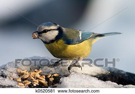 ΜΑΓΙΚΟ μεγαλο πουλι
