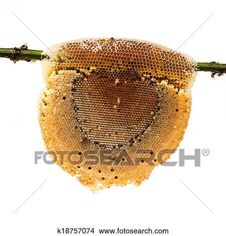 벌집, 와, 꿀, 와..., 꿀벌, 통하고 있는, 대나무, 가지, 고립된, 백색 ...