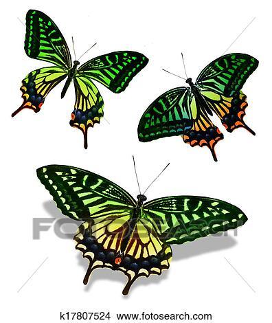 Kresby Tri Barva Motyl K17807524 Hledat Klipartove Ilustrace