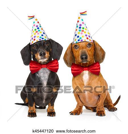 gelukkige verjaardag, hond stock afbeelding | k45447120 | fotosearch