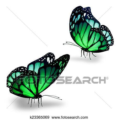 Colección de ilustraciones - dos, color, mariposas k23365069 ...