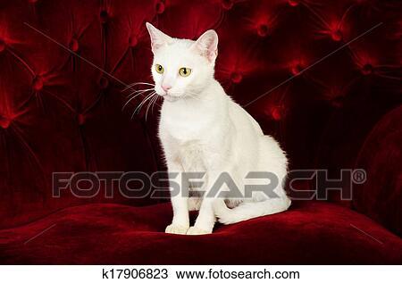 8870b94f71 Stock Photo of Beautiful White Cat Kitten posing on Red Velvet Couch ...